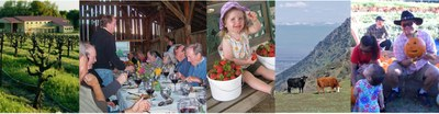photo stitch of farm activities