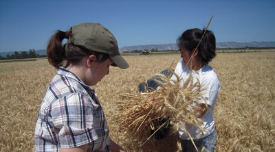 Students with hay